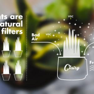 La risposta è nelle piante